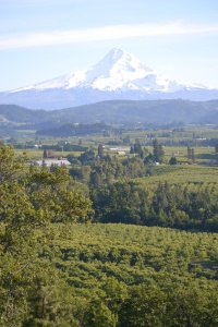 Mount Hood,from Panoramic Point, Hood River OR