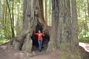 Stout Grove, Jedediah Smith Redwoods State Park, Crescent City CA