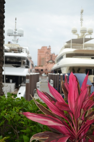Bill loved the yachts in the marina