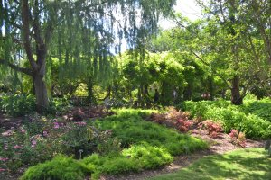 San Antoio Botanical Garden, Brackenridge Park, San Antonio TX