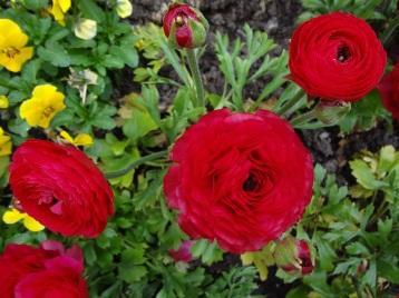 5p-flowers-3