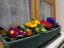 5p-flowers
