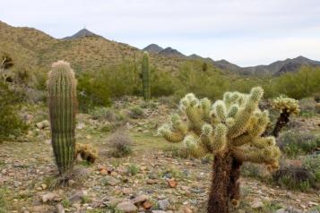 Desert Preserve (2)
