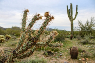 Desert Preserve (27)