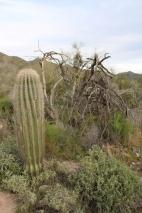 Desert Preserve (4)