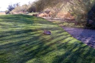 Golf Course (26)